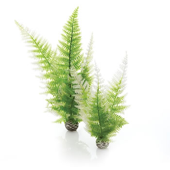 Image of BiOrb Winter Ferns Plant Pack