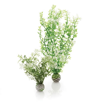 Image of BiOrb Winter Flowers Plant Pack