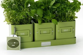 Image of 3x Windowsill Herb Pots on a Tray by Burgon & Ball - Green