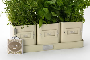 Image of 3 Pretty Windowsill Herb Pots on a Tray by Burgon & Ball, Cream
