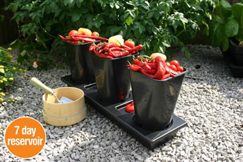 Image of Chilligrow Chilli Planter
