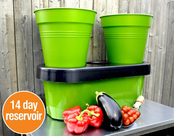 Extra image of Deluxe Tomato Growing Kit