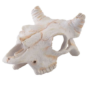 Image of Exo Terra Buffalo Skull - Small