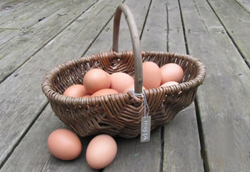 Image of Beautiful Hand-Made Rustic Willow Garden Trug Basket wicker, small