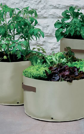 Image of 3 Haxnicks Vegetable Patio Planters