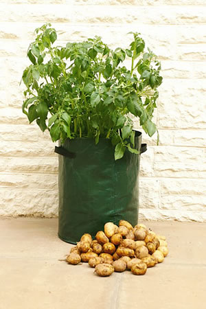 Image of 3 Haxnicks Potato Patio Planter Bags: Tough & sturdy with drainage holes