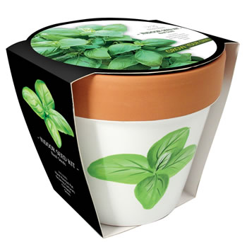 Image of Taylors Indoor Basil Kit