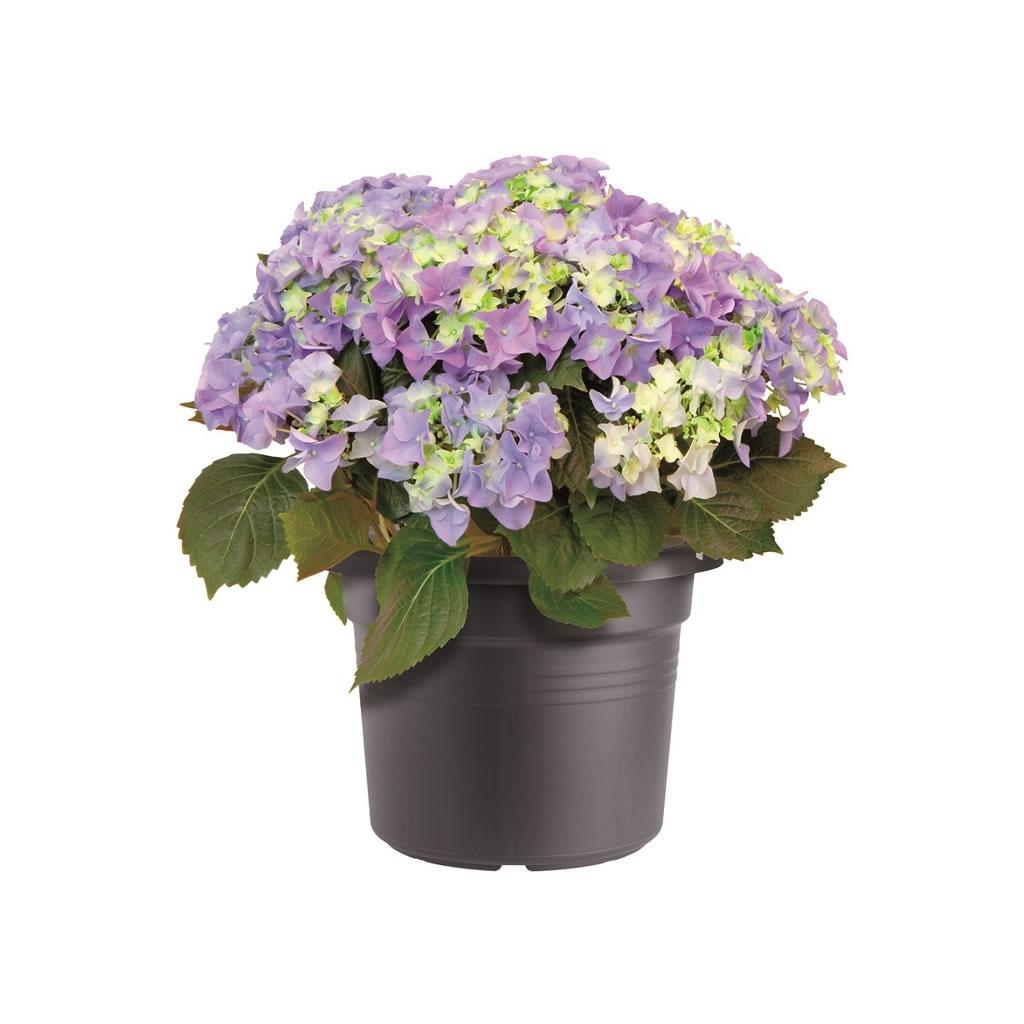 3 x elho green basics cylinder plant pot anthracite 25cm 13 5 garden4less uk shop. Black Bedroom Furniture Sets. Home Design Ideas