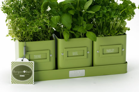 3x Windowsill Herb Pots On A Tray By Burgon Ball Green