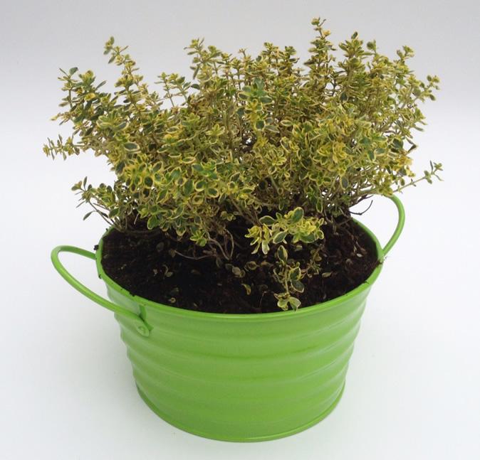 3x Pretty Ribbed 16cm Metal Plant Pot Holders Green 1075