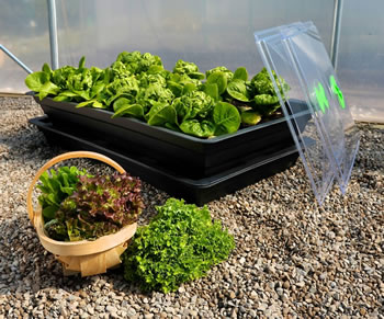 Image of Salad & Veg Planter with seed Starter Lid - Medium