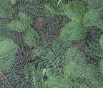Image of Extra Fine Insect Netting 0.23mm Mesh Keeps out Aphids, Black & Whitefly 5m x 2m