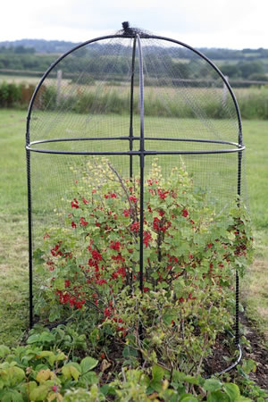 Image of Haxnicks Steel Round Garden Fruit Cage