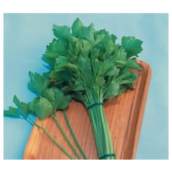 Small Image of Kintsai Chinese Celery plants