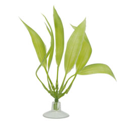 Small Image of Marina Betta Amazon Sword Plant