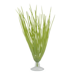 Small Image of Marina Betta Hairgrass Plant