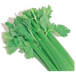Small Image of Celery plants