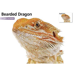 Small Image of Bearded Dragon 12 Month 2016 A4 Calendar