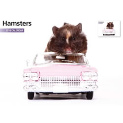 Small Image of Hamster 12 Month 2016 A4 Calendar