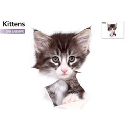 Small Image of Kittens 12 Month 2016 A4 Calendar
