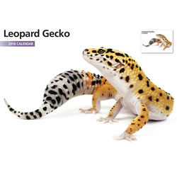 Small Image of Leopard Gecko 12 Month 2016 A4 Calendar