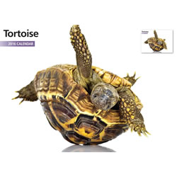 Small Image of Tortoise 12 Month 2016 A4 Calendar