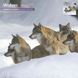 Small Image of Wolves 18 Month 2016 Traditional Wall Calendar