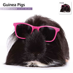 Small Image of Guinea Pig 18 Month 2016 Modern Wall Calendar