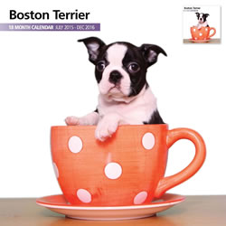 Small Image of Boston Terrier - 2016 18 Month Calendar