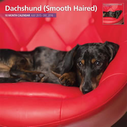 Small Image of Smooth Haired Dachshund - 2016 18 Month Traditional Calendar