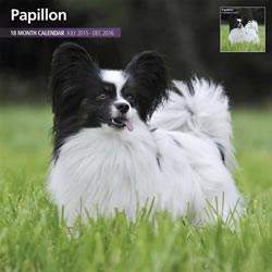 Small Image of Papillon - 2016 18 Month Traditional Calendar