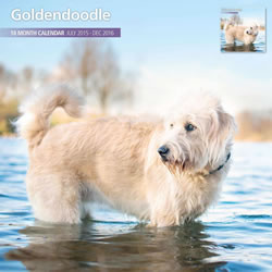 Small Image of Goldendoodle - 2016 18 Month Traditional Calendar