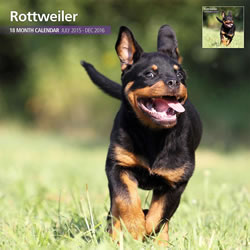 Small Image of Rottweiler - 2016 18 Month Traditional Calendar