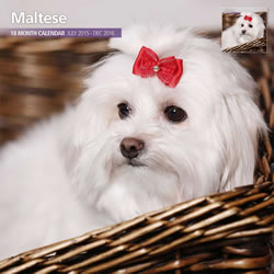 Small Image of Maltese - 2016 18 Month Traditional Calendar