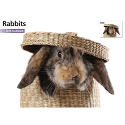 Small Image of Rabbits 12 Month 2016 A4 Calendar