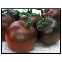 Small Image of Black Russian Tomato plants