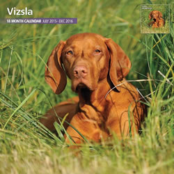Small Image of Vizsla - 2016 18 Month Traditional Calendar