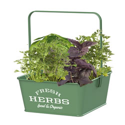 Small Image of Nutley's Green Fresh Herb Caddies with Handle Retro Organic Fresh