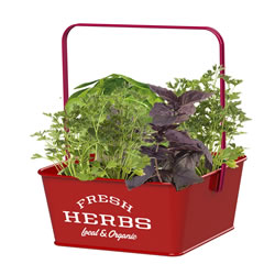 Small Image of Nutley's Red Fresh Herb Caddies with Handle Retro Organic Fresh