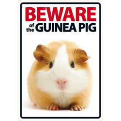 Small Image of Beware Of The Guinea Pig