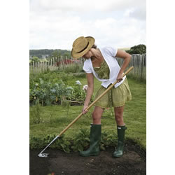 Extra image of Haxnicks Speed Hoe Weeding Tool Long Handled