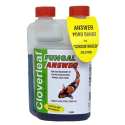 Small Image of Cloverleaf Fungal Answer 250ML