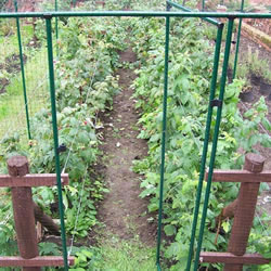 Small Image of Deluxe Fruit Cage Door