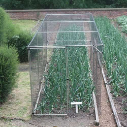 Small Image of Standard Fruit Cage 183cm high x 366cm long x 366cm wide