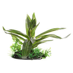 Small Image of Fluval Giant Sagittaia Plant 10cm