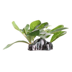 Small Image of Fluval Samolus Sword Plant 7cm