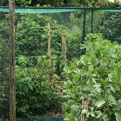 Small Image of Bird Netting Green Woven Garden: Fruit Cages, Ponds: 16m* wide, 5m