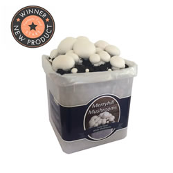 Small Image of Nutley's Fresh Grow Your Own Merryhill White Mushroom Kit spawned & growing
