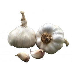 3 Isle of Wight British garlic seed bulbs Solent Wight sow now
