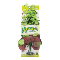 Small Image of Marina Naturals Pennywort Silk Plant - Large